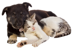 Pet urine removal in Colorado Springs and Monument